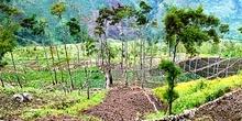 Campos de cultivos construidos en pendiente, Irian Jaya, Indones