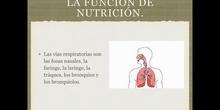 6º naturales la función de nutrición, la respiración