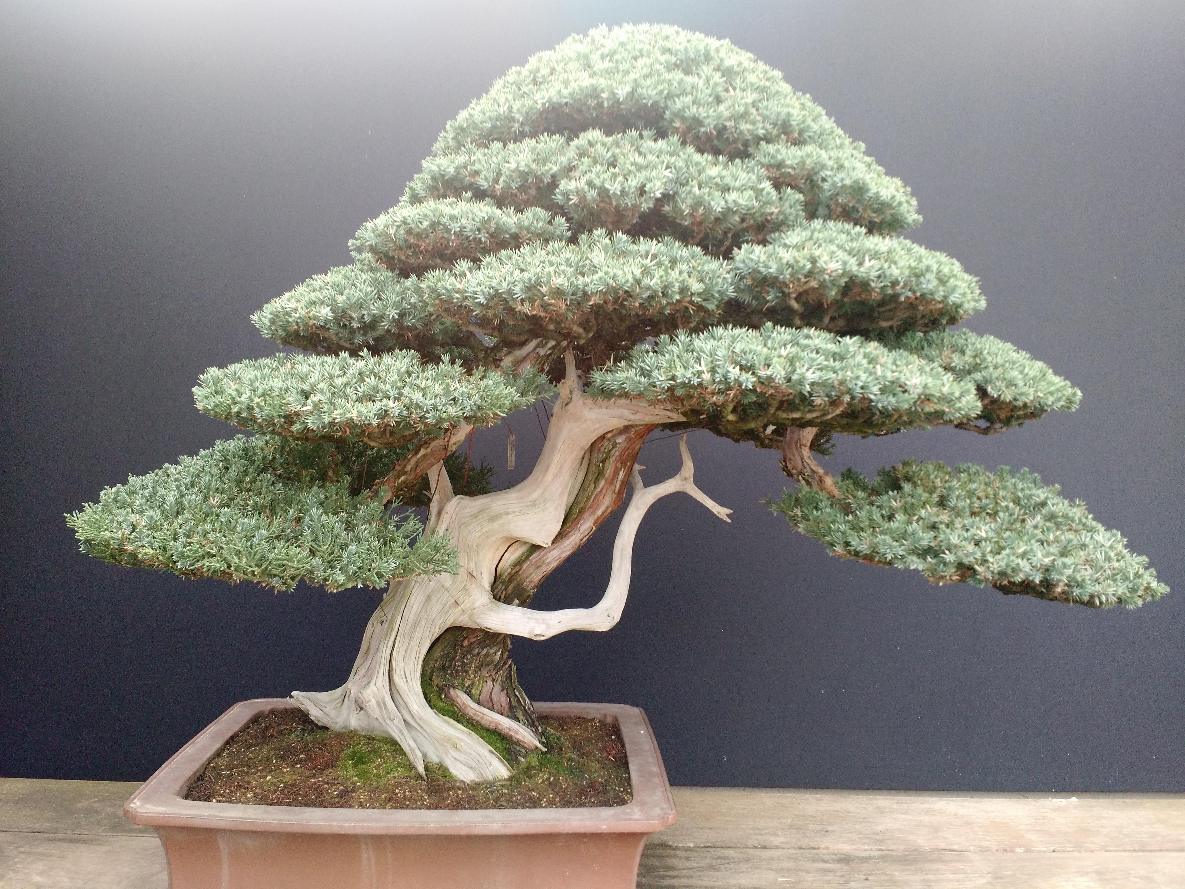 Museo del Bonsai 15