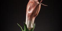 IES_SANISIDRO_MUSEO_Botanica_001