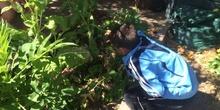 2019_06_11_4º observa insectos en el huerto_CEIP FDLR_Las Rozas 27