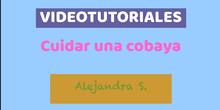 Videotutorial Alejandra S.