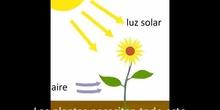 Plantas explicación