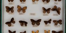 IES_CARDENALCISNEROS_Insectos_031