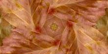 Simetría en aspa del corazón de la hoja