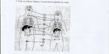 Système endocrinien