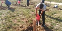 Plantación en el parque forestal de Valdebebas 2019 9