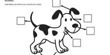 Partes del cuerpo del perro