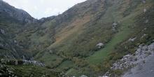 Picos de Europa. Arbustos