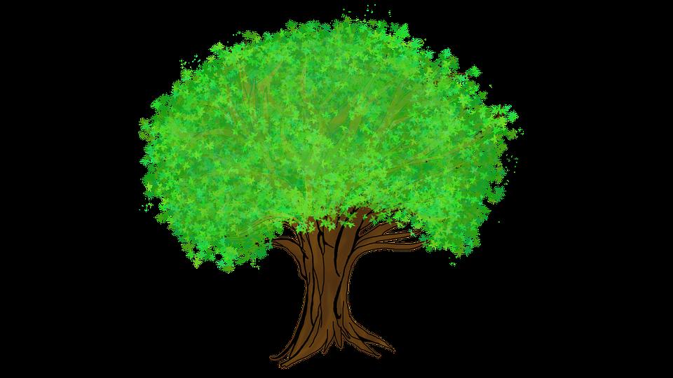 sesión 7 árbol