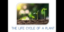 PRIMARIA - 1º - THE LIFE CYCLE OF A PLANT - CIENCIAS DE LA NATURALEZA - FORMACIÓN