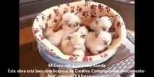 Kittens editada