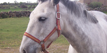Primer plano de caballo