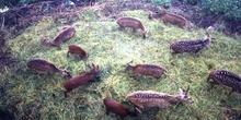 Animales en el Parque del Ciervo de Gantok, Sikkim, India