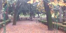 Las acacias en otoño