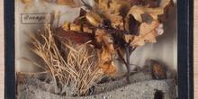 IES_CARDENALCISNEROS_Insectos_028