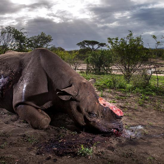 Ganadores del Wildlife Photographer of the Year 2017 8