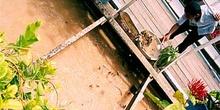 Piscifactoría en Siem Reap, Camboya