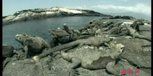 The Wonders of Iguana: The Galapagos Islands: UNESCO Culture Sector