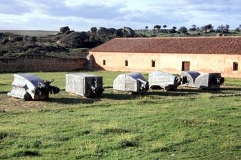 Escultura Los Toros de Hormigón - Malpartida de Cáceres