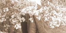 Primavera en Torres