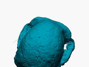 Cráneo de australopitecus