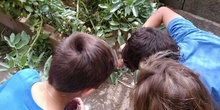 2019_06_07_Los alumnos de Quinto observan los insectos del huerto_CEIP FDLR_Las Rozas 23