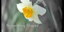 Something Stupid_isarefono