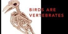 P2_NS Birds B