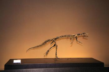 Hypsilophodon (Dinosauria, Ornithopoda), Museo del Jurásico de A