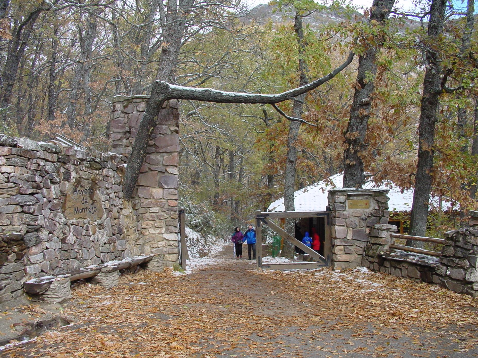 Hayedo en Montejo de la Sierra