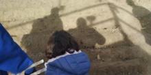 1º de Primaria_Plantamos garbanzo  13