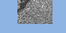 Retículo endoplasmático  (eucariota vegetal)