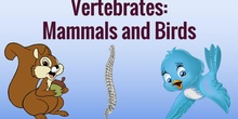 Game: vertebrates - mammals or birds?