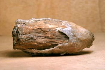 Xilópalo (Madera fósil) Triásico