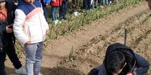 1º de Primaria_Plantamos garbanzo  4