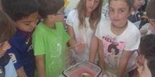 Cuarto A y B celebra el Día de la Familia con sorpresas..._CEIP FDLR_Las Rozas 4