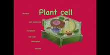 PRIMARIA - 5º - CELL STRUCTURE - NATURAL SCIENCE