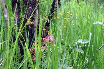 Vegetación en las proximidades de Baños, Ecuador