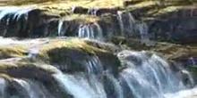 El agua y el medio ambiente