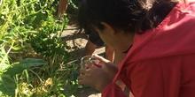2019_06_11_4º observa insectos en el huerto_CEIP FDLR_Las Rozas 31