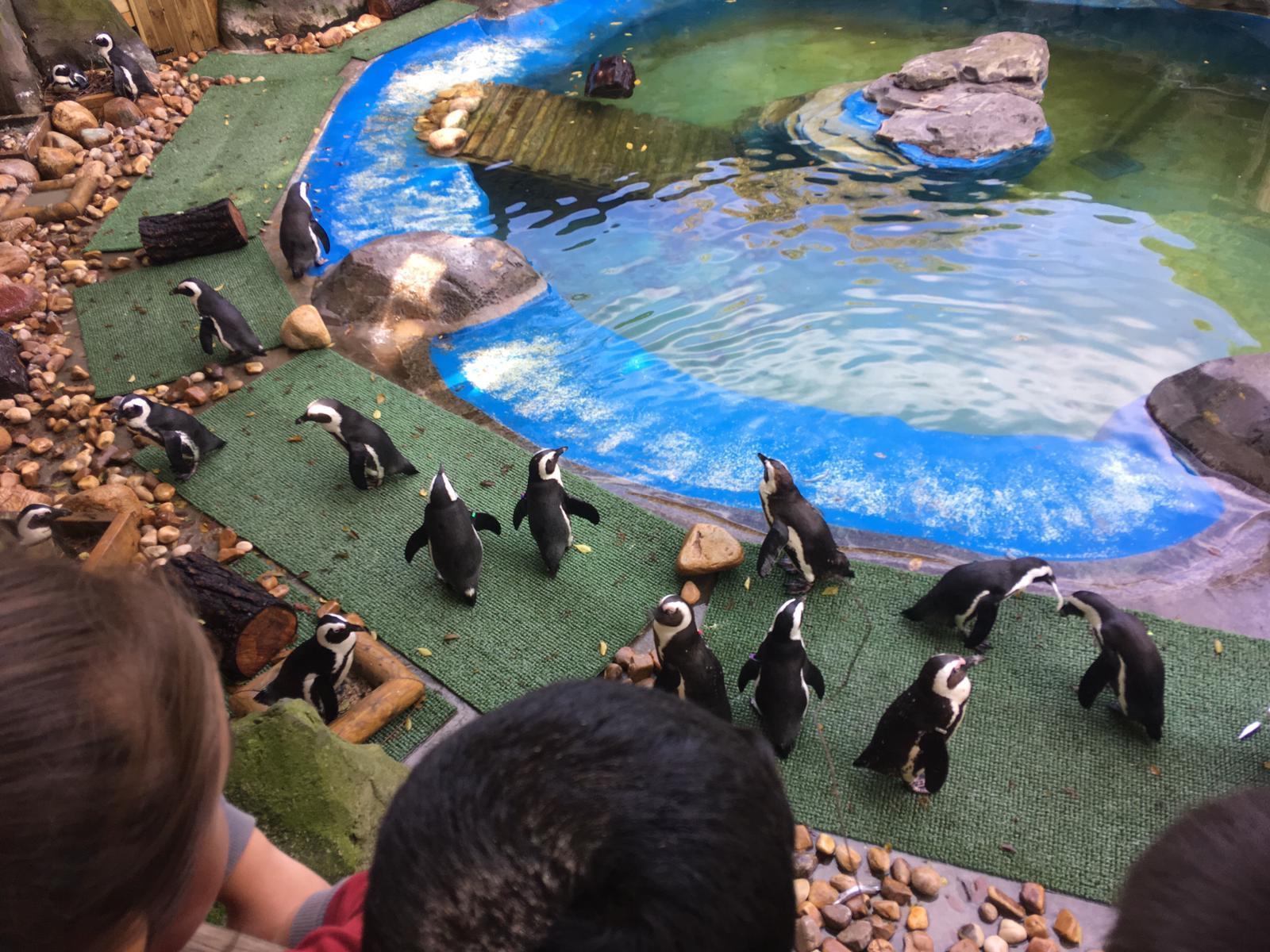 Excursión al zoo 5 años, 1º y 2º Luis Bello 9