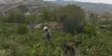 L'essor difficile du vin turc