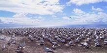 Vídeo de prueba de pingüinos