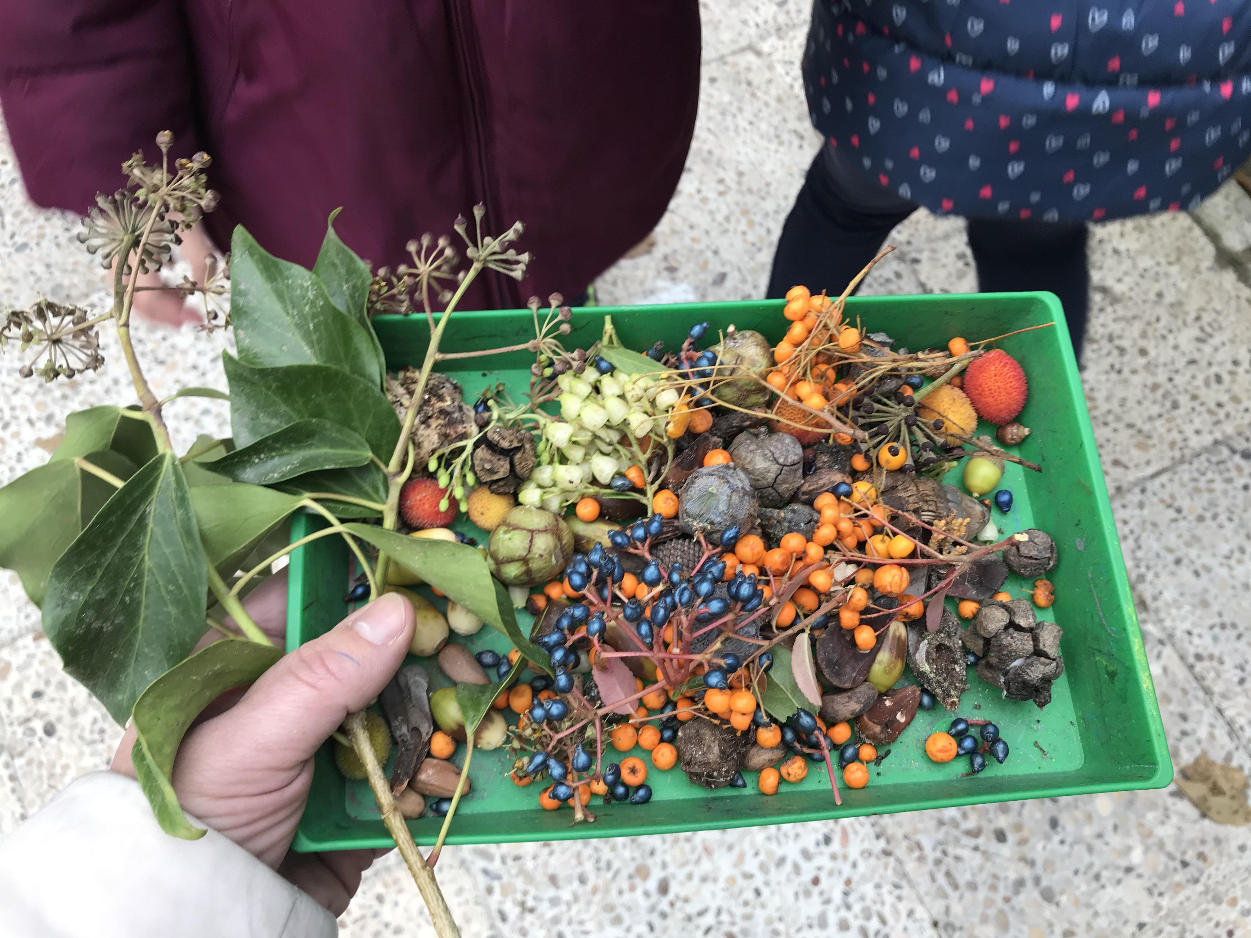 2018_12_05_1º Y 2º TRABAJAN LA BIODIVERSIDAD_PROYECTO THE GREAT PLANT HUNT_CEIP FDLR_Las Rozas 9