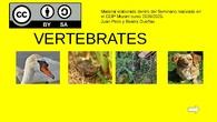VERTEBRATES.pptx