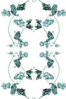 Simetría de la rama de lúpulo en azules fríos