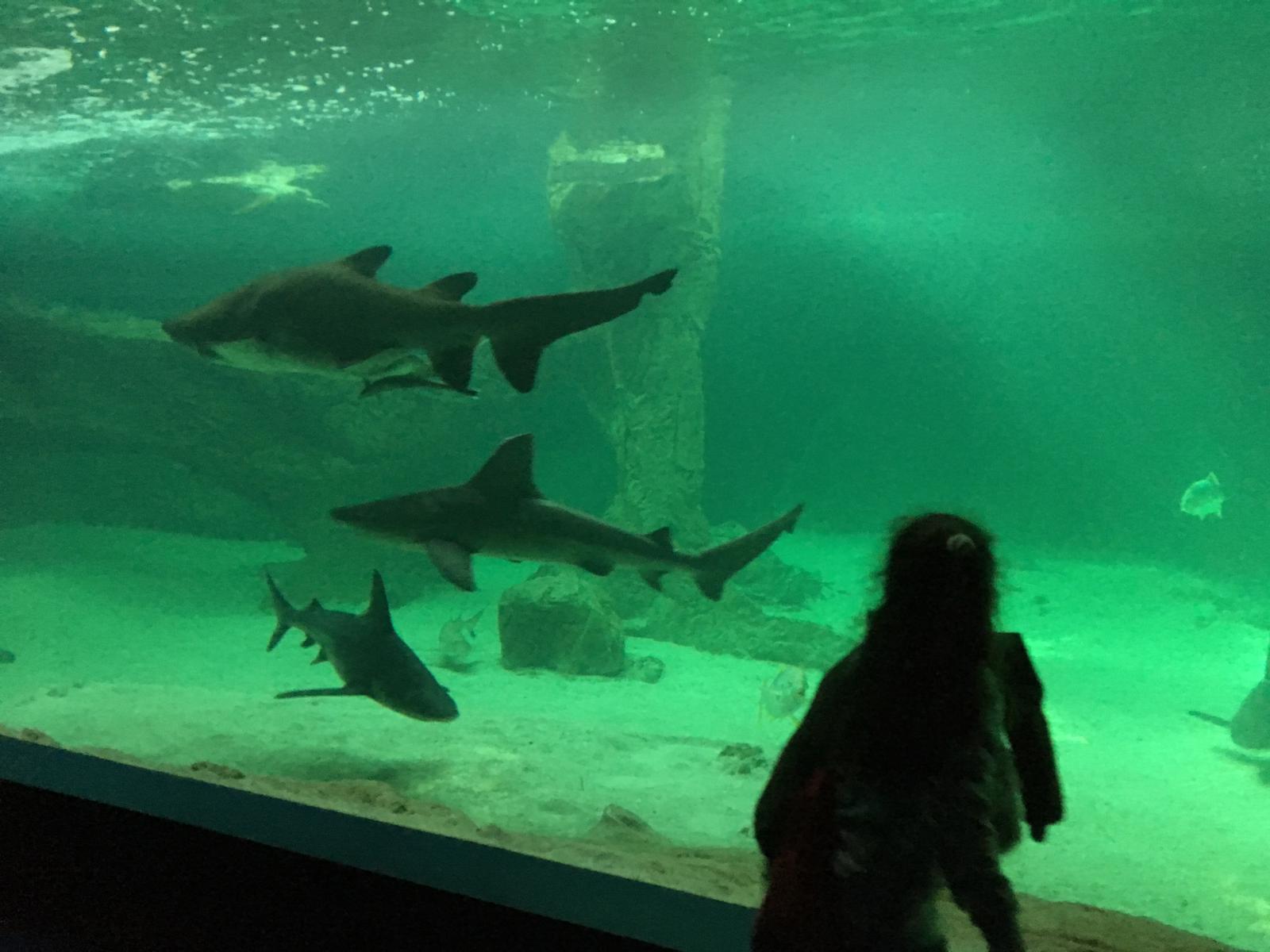 Excursión al zoo 5 años, 1º y 2º Luis Bello 35