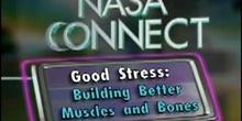 Stress Type and Data Analysis