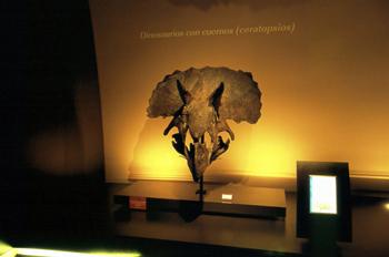 Ceratópsido (Dinosaurio con cuernos), Museo del Jurásico de Astu